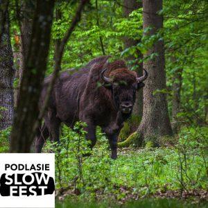 Podlasie SlowFest | Puszcza Białowieska- skarb ludzkości